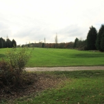 View to the first tee which shows the bank of evergeen conifers that line the boundary with Foxbridge Lane