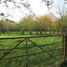 Photo 18 - Old Barkfold Orchard Plaistow