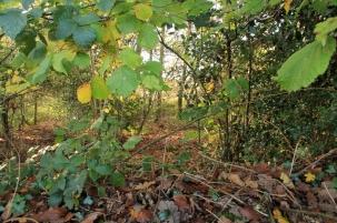 Photo 20 Land Adjacent to Todhurst