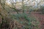 Photo 25 Land adjacent to Todhurst