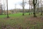 Photo 95 Durfold Wood