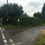 High hedges in front of Golden Cross Cottages (Rumbolds Lane - a private road) from The Street