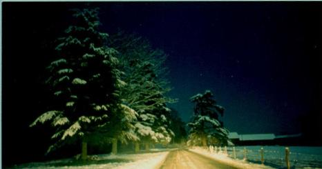 c1980 - 3AM on a winter's night. The cypress fir trees were destroyed in the great storm of 16 Oct 1987. The landowner has since planted new trees. (Photo: J.F. King-Wilson)
