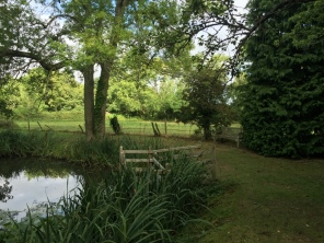 View across the pond to the green field behind (Photo: C. Gibson-Pierce)